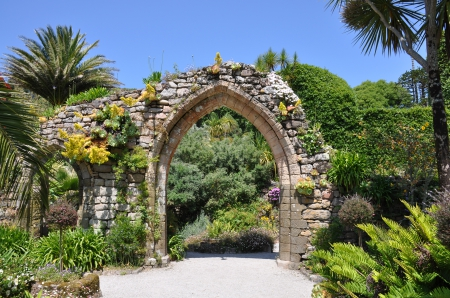 Abbey Ruins at Tresco Abbey Tropical Gardens Isles of Scilly England - gatden, cornwall, britain, ruins, palm, abbey, old, historic, botany, hardy, flowers, islands, succulents, england, west, isles, uk, trees, cactus, south, scilly, united kingdom, plants, gardens, island, cornish, great, tropical