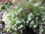 Flowers mid-summer 10