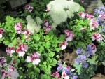 Flowers mid-summer 15