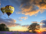 colorful hot air balloons over lavender fields
