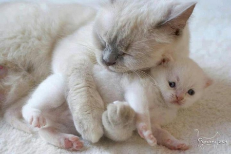 Only mine...... - cute, only mine, aanimals, kitten, cats
