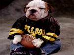 a real bulldog fan