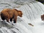 *** Bears hunting ***