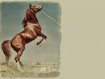 Desert Arabian Horse F2