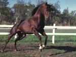 High Flyer - Horse F2