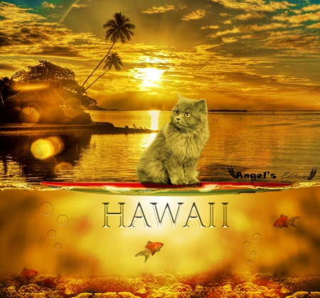 the cat in hawaii - beach, cat, hawaii, gato