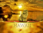 the cat in hawaii
