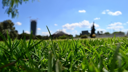 Grass - Grass, green, nature, sky