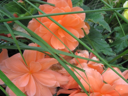Exotic flowers at the pyramids 07 - photography, green, Orange, garden, Flowers