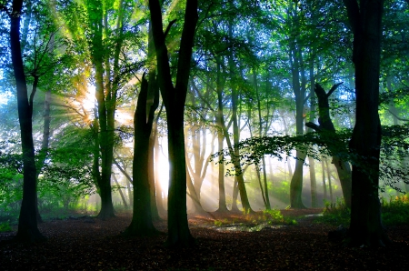 Image result for magical woodland image