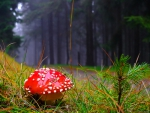 Lonely mushroom in the forest