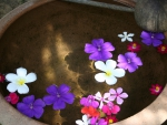 Plumeria floating at a Spa