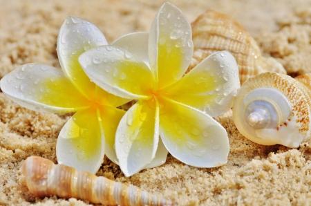 And Shells On A Beach  Flowers Plumeria Hawaiian Hawaii
