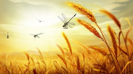 Wheat 2 Harvest - harvest, grain, grass, bread, country, sky, agriculture, farm, gold, dragonflies, field, oats