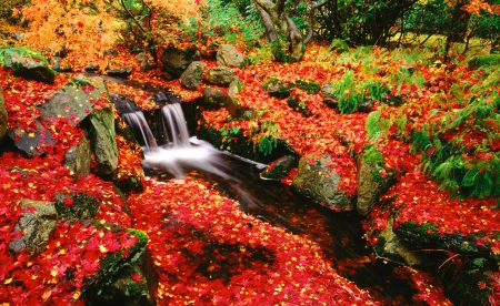 Stream in autumn - stream, fall, red, colorful, silent, autumn, grass, falling, beautiful, foliage, leaves, cascades, nice, waterfall, river, tranquility, forest, quiet, calmness, lovely, creek, serenity, nature