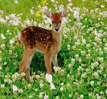 Beautiful deer - flower, nature, beautiful, deer