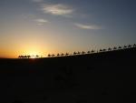Sahara convoy