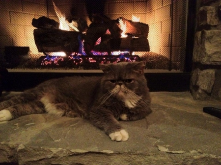 kitty by the fireplace - fireplace, cats, animals, kitty