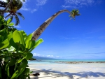Palm Tree on Beach - Samoa