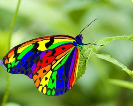 Rainbow Butterfly Butterflies Animals Background Wallpapers On