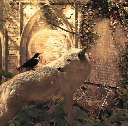 wolf and rave - fantasy, wallpaper, friendship, quotes, pack, dog, lobo, arctic, black, abstract, winter, timber, snow, wolf wallpaper, wolfrunning, wolf, white, lone wolf, howling, wild animal black, howl, canine, wolf pack, solitude, grey, the pack, mythical, majestic, wisdom beautiful, spirit, canis lupus, grey wolf, nature, wolves