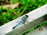 Dragonfly on Ladder