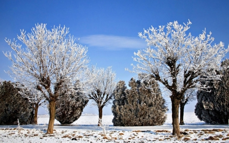 Winter Trees Landscape