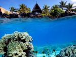 Underwater Shot of Coral Reef and Beach Hut