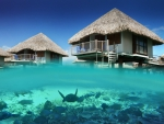 Lagoon under Water Bungalow