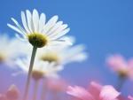 Tiny White Flower w/Blurred Effect.