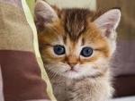 hidding cute kitty
