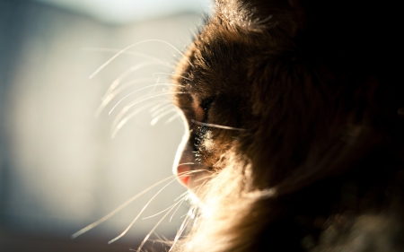 OUT TO SEE THE WORLD - lovely, window, kittens, beautiful, adorable, cat eyes, cat, pets, close up, macro, cats, animals