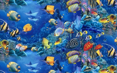 Fish - beauty, water, sea creatures, fish
