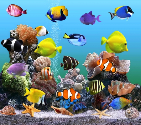 Marine Aquarium - fishes, sand, underwater, seashells, tropical, reef, aquarium, starfish, live, coral, marine