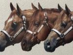 Quarter Horses 2