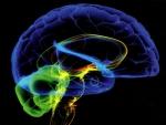 Brain Works f2
