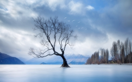 birds over a tree in a misty lake - tree, birds, clouds, lake, mist