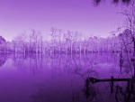 Purple Lake