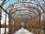 bare trellis tunnel in winter