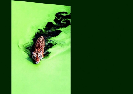 green - water, tiger, green, vibrant water