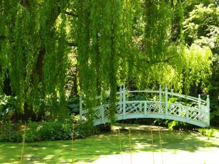 Green Garden - Other & Nature Background Wallpapers on Desktop Nexus ...