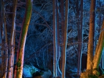 fantastic lights in a forest at night