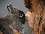 *** Girl and rabbit ***