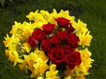 ♥ Yellow Daffodils and Red Roses♥