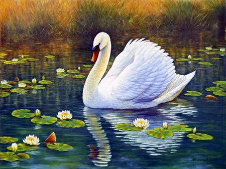 Swan and lotus birds animals background wallpapers on - Swan wallpapers for desktop ...