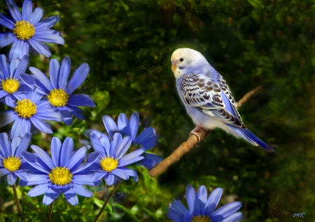 Flowers and parrot - pretty, lovely, grass, beautiful, adorable, parrot, sweet, cute, nice, bird, summer, flowers, nature, blue
