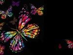 Butterfly Design III