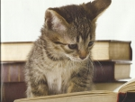 A tabby kitten reading a book