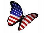 American Flag on Butterfly Flying Isolated