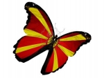 Macedonian flag butterfly
